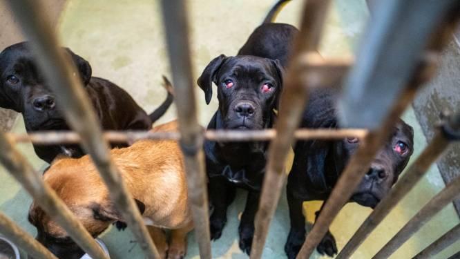 """Dierenbescherming moet in één klap 68 honden meenemen bij fokker: """"Dit is een financiële ramp voor ons"""""""