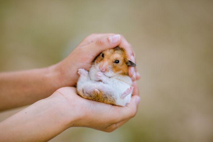 Le déclin dévastateur de la population du hamster, qui se chiffrait autrefois en millions dans une zone s'étendant de l'Europe centrale à Sibérie, avait été précédemment observée en Europe occidentale et centrale.