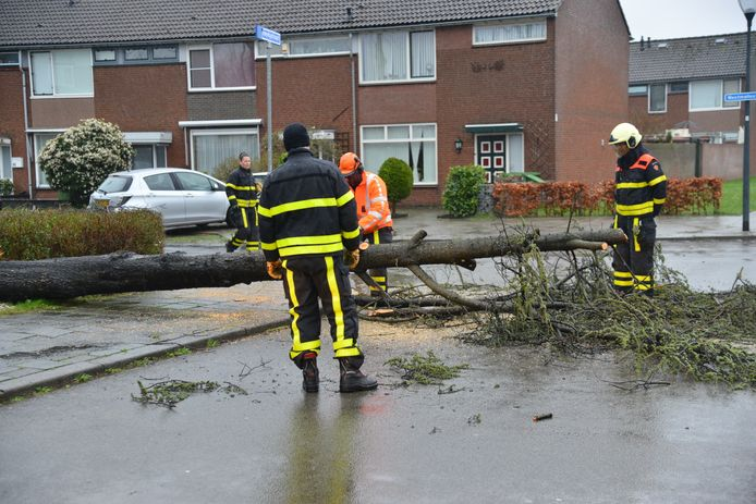 In de Malmedystraat ging een boom omver.
