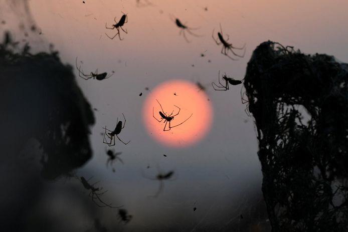 Beeld ter illustratie. Spinnen in een web bij een meer in Griekenland bij zonsondergang.