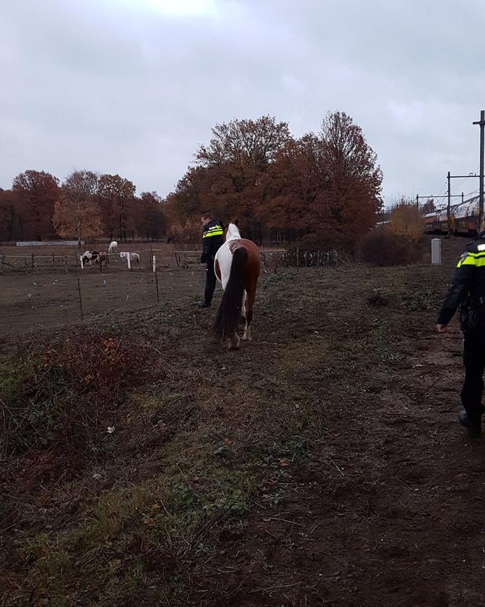 Het paard dat op het spoor stond tussen Eindhoven en Helmond.