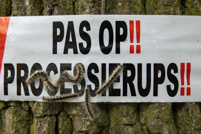 De eikenprocessierups rukt op in Baarn.