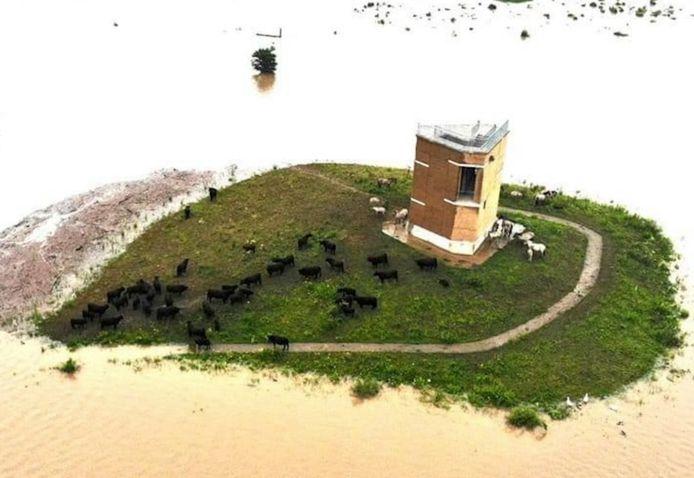 De dieren zijn verzameld op een eilandje tussen een massa kolkend water.