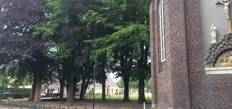 Bomen gaan boven zonnepanelen in Uden