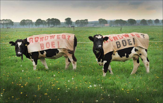 Oude koeien. Al in 2013 werd er actie gevoerd tegen de rondweg. Hier door Bertha en Klazien.