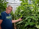 Al 10 jaar kweekt De Jong aubergines in Dinteloord: 'Nooit spijt dat we hiernaartoe zijn gekomen'