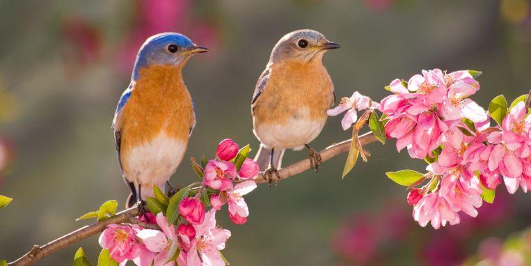 gratis-vogelcursus.jpg
