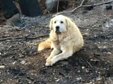 Hond wacht maand op baasje bij afgebrande woning Californië