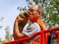 Brandweer redt bange parkiet uit metershoge boom in Vlaardingen