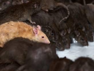 Man valt door zinkgat aan bushalte New York en belandt in rattenput