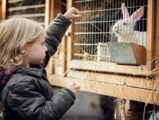 Minister zet mes in nieuwe dierenwet: huisdieren vallen niet onder nieuwe regels