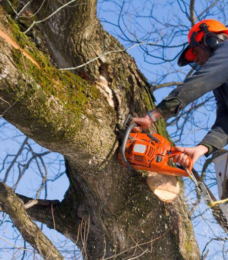 Niet acht maar zes bomen gekapt aan Oosterhoutse Reigerstraat