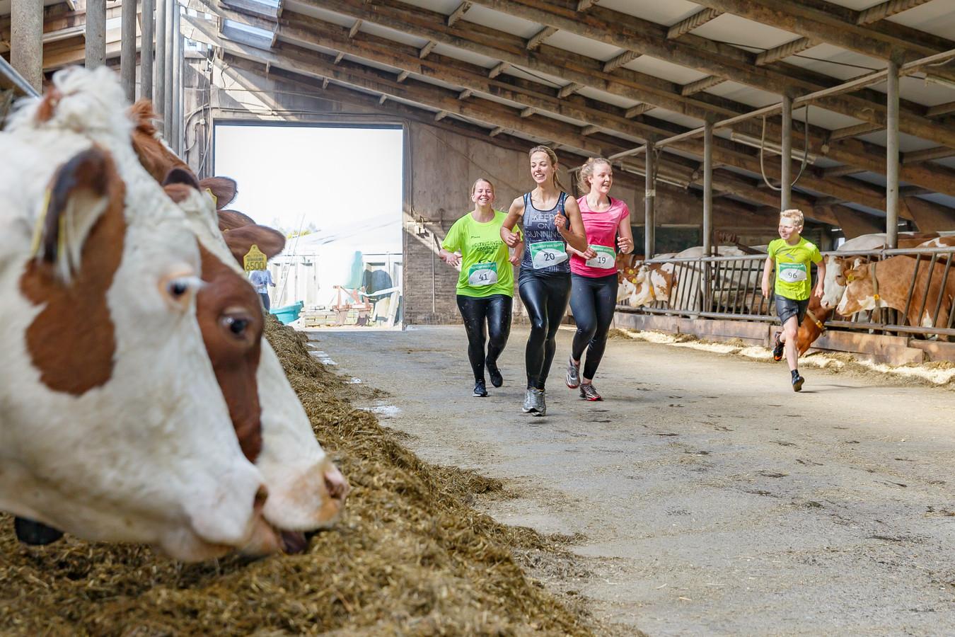 Deelnemers door de stal waar men letterlijk en figuurlijk leert kennismaken met 'boerenbedrijf'. Studenten van Terra MBO organiseren in samenwerking met Aeres Hogeschool, een Mud-run op de Maargies Hoeve te Kallenkote.