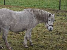 Pony mishandeld in Zeeland: politie start onderzoek