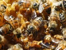 En Belgique, 23% est un taux de mortalité acceptable pour les abeilles exposées à des pesticides