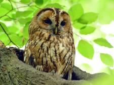 Wat is er gebeurd dat J. van Huet van die uilenbeeldjes af wil?