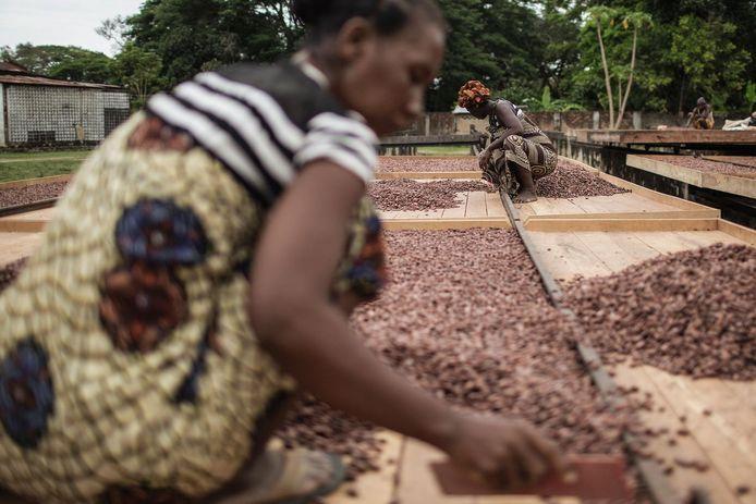 Een cacaoboer in Madagaskar.