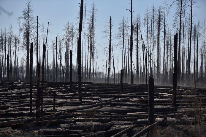 Verbrande bomen en zwarte stompen zijn de stille getuigen van de brand die door gebied trok.