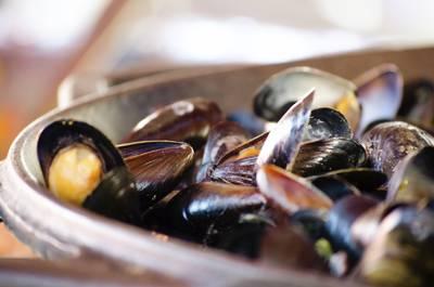 HZ wil opleiding Food & Gastronomy beginnen