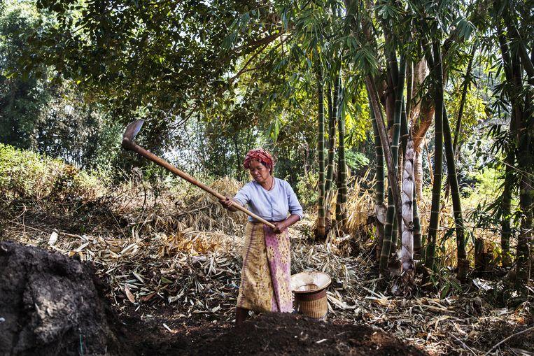 Een Myanmarese boerin aan het werk. Beeld Aurélie Geurts