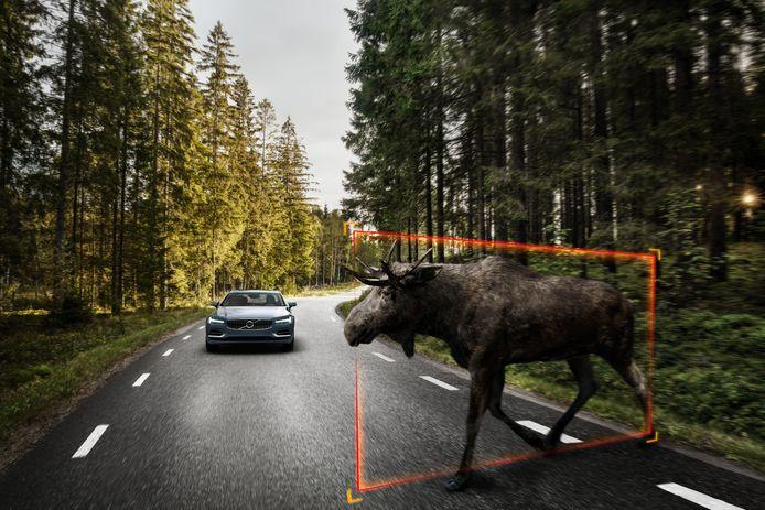 Met welk geluid waarschuw je passagiers van een autonome auto voor overstekend wild? Ook dat is Volvo aan het onderzoeken