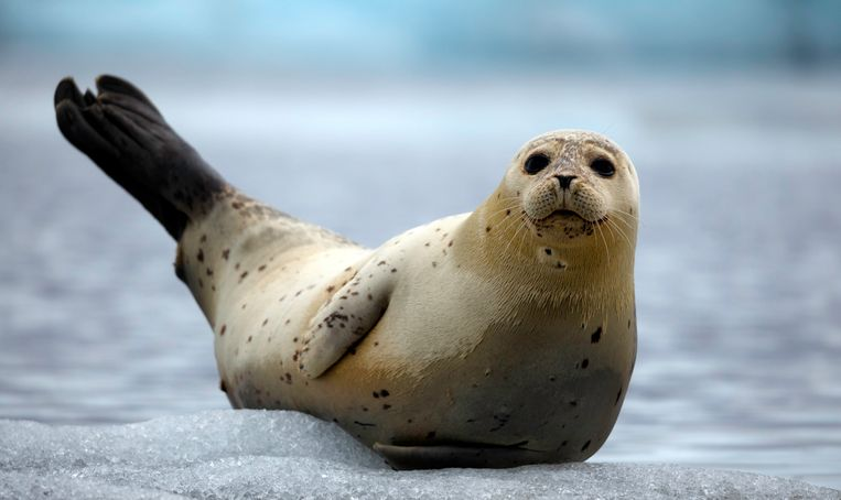 fur-seal-on-an-iceberg.jpg