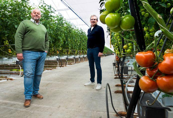 Jeroen van der Wansem (links) en Marcel de Groot in een van de tomatenkassen van Gebr. de Groot Kwekerijen in de Harmelerwaard.