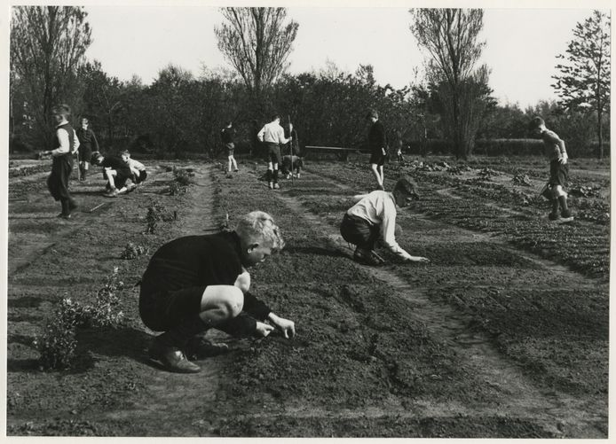 De schooltuinen aan de Mient in 1961.