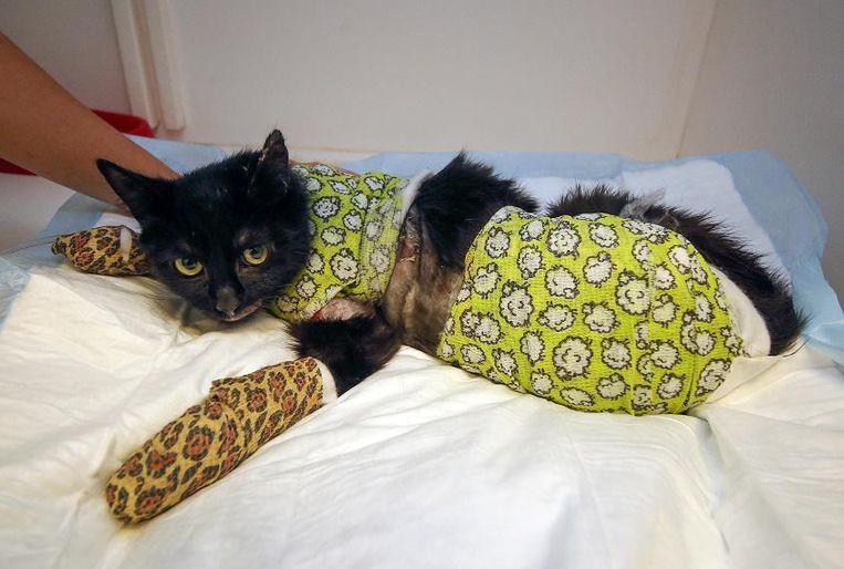 De kat had overal zware brandwonden en werd in een stevig verband gewikkeld. Hier een archiefbeeld van toen.