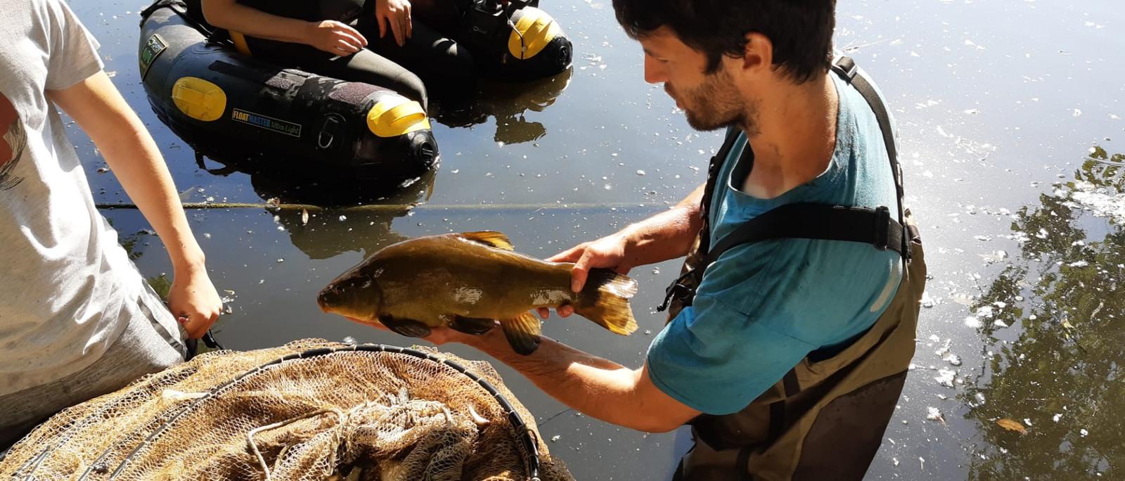 Onderzoeker Pieterjan Verhelst bekijkt de vissen uit de fuik.