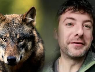 Wat doe je als je tijdens het wandelen een wolf ziet? En hoe gevaarlijk is hij echt? Wolvenkenner legt uit