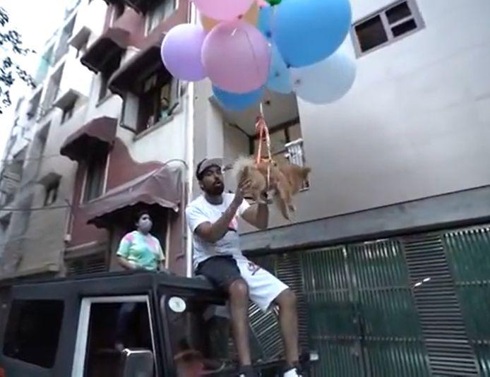 De Indiase youtuber Gaurav Sharma werd gearresteerd omdat hij zijn hond wou laten vliegen met behulp van heliumballonnen.
