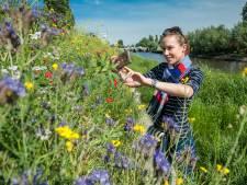 Verontwaardiging over maaien bloemenzee langs struinpad Hollandsche IJssel: 'Alles is weg'
