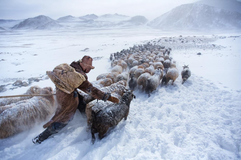 Een nomade trekt met zijn geitenkudde door het Altajgebergte in Mongolië op zoek naar graasland na zware sneeuwval.