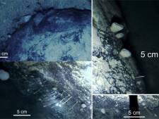 Mysterieuze dieren ontdekt onder 900 meter dikke ijslaag Antarctica