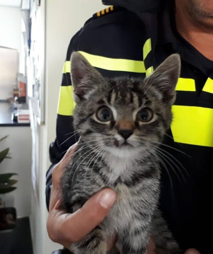 Het katje op de afbeelding bij het bericht op de Facebookpagina van politie Noordoostpolder/Urk.
