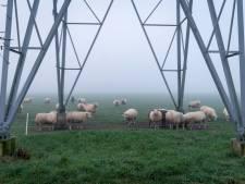 Schapen in Reeth doemen op uit de mist