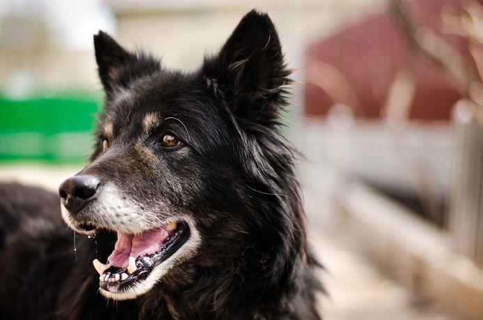 ,,Paarden en loslopende honden gaan niet samen'', stellen Dordtse maneges.