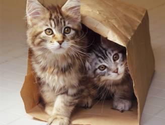 Nood aan een opkikker? Dankzij de 'Cat Cam' kan je alle avonturen van de schattigste asielkatjes volgen
