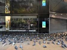 Vergaste duiven veroorzaken ophef in Assen: 'Doden is geen oplossing'