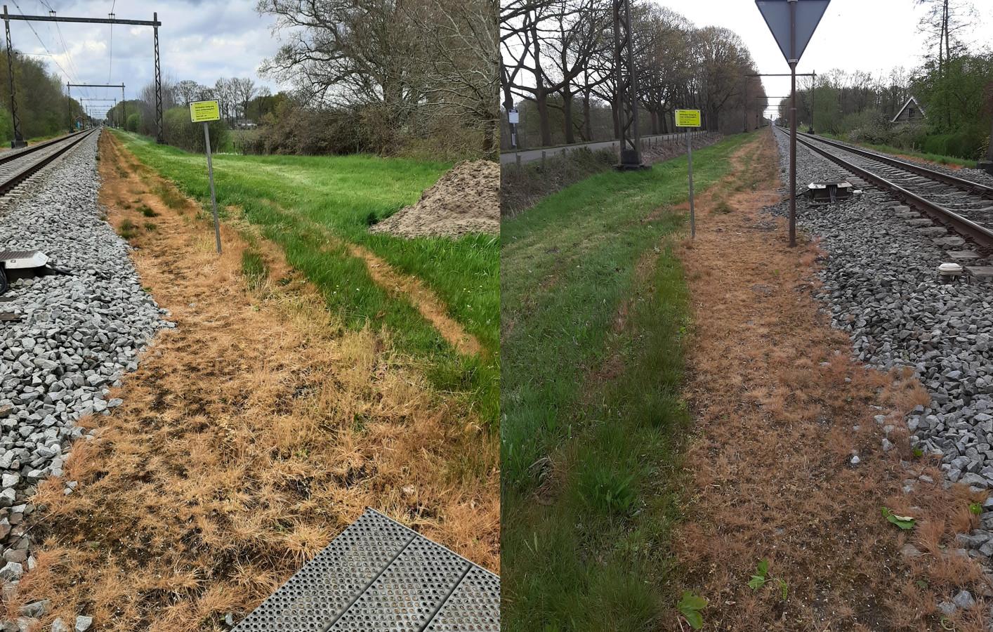 Het gras langs het spoor ter hoogte van de overweg bij de Puinweg in het buitengebied van Olst slaat geel uit.