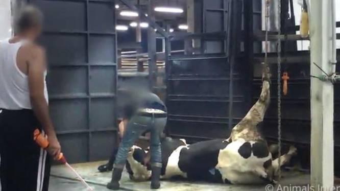 Le triste sort des animaux exportés hors de l'UE