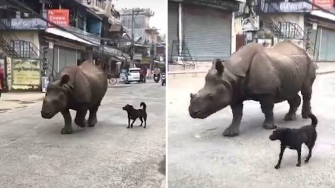 Video van de Dag   Deze hond laat even zijn huisdier uit, jij zou er voor op de loop gaan
