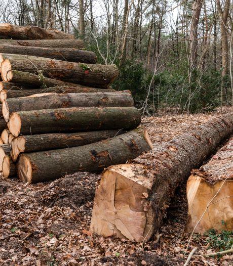 Partij voor de Dieren over bomenkap Amersfoort: overheid moet weer centraal toezicht houden