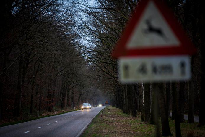 HEEZE - Op de Somerenseweg tussen Heeze en Someren worden veel dieren aangereden, Natuurorganisaties willen dat gemeente maatregelen gaat nemen, kosten 550.000 Euro