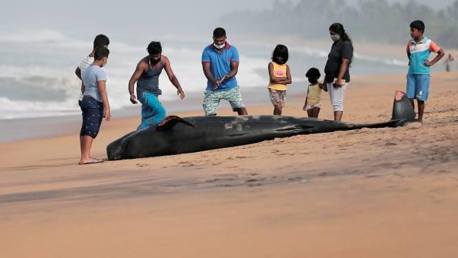Sri Lankanen trotseren avondklok om meer dan 100 gestrande grienden te redden