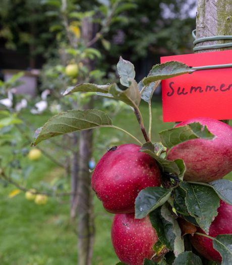 Appelboom in stadstuin kan prima: 'Tegel eruit, fruitboom erin'