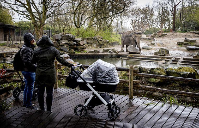 Bezoekers in diergaarde Blijdorp. Beeld ANP