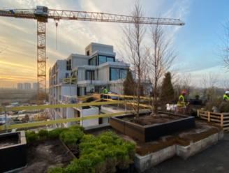 Nieuw stadsbos van vijf hectare op Scheldekaaien Nieuw-Zuid