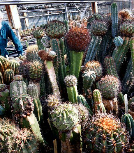 Hans heeft 100.000 cactussen: 'Die hobby is wellicht uit de hand gelopen, ja'